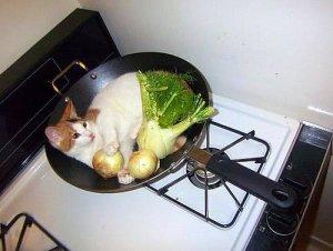 chat-cuisine